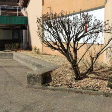 Entretien des espaces verts collège – Montalieu